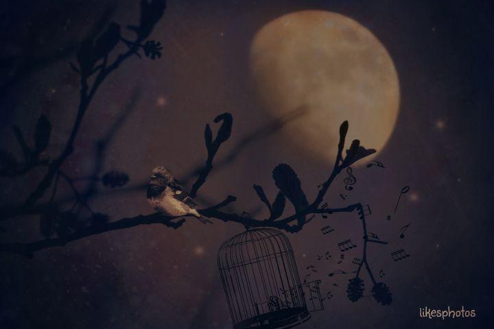 quotes,tree,moon,nearandfar,emotion