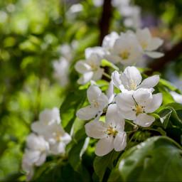 flower spring beijing