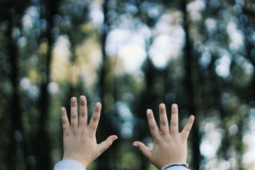 wood hands forest