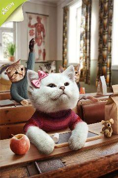 cat artwork photoshop school