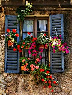 window beatiful colorful flowers nature