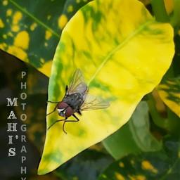 insect hdr nature colorful mahi