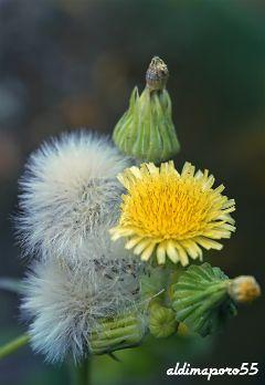 photography nature flower closeup simplicity