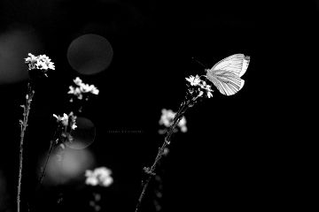 deeliriouss blackandwhite photography nature emotions