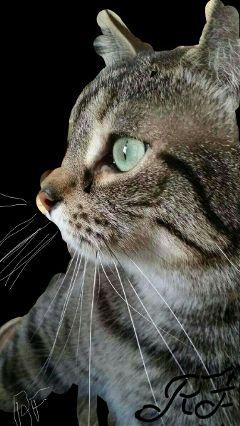 kitten photography blackandwhite colorsplash