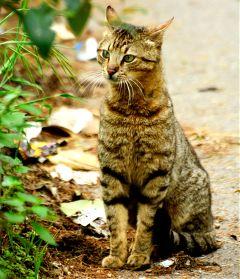 cat cats nofilter kedi
