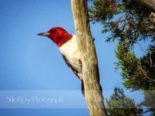 garden nature photography petsandanimals woodpecker