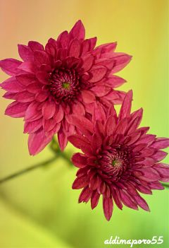 photography nature flower closeup