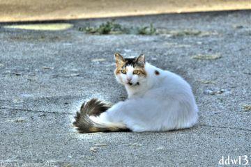 lucy cat feral tnr rescue