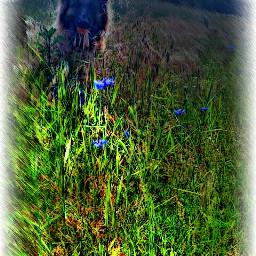 nature photography artistic petsandanimals blue