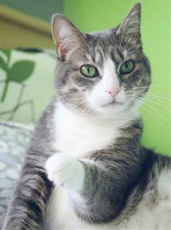 petsandanimals cute cat kitty green
