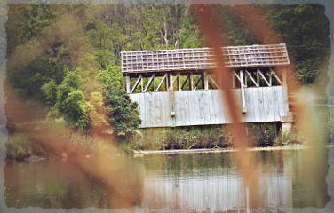 photography summer nature bridge