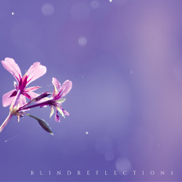 bokeh colorful flower nature photography