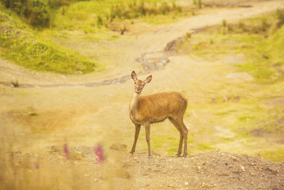 I luckily came across some deer the other day and couldn't miss the oppurtunity to take some photos 📷  #deer  #nature  #landscape  #beautiful  #amazing  #color  #colorful  #photo  #photography  #wildlife  #animal  #sunset  #summer  #like  #love  #follow  #feature  #photooftheday  #naturephotography