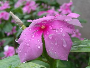 photography hdr flower colorful rain