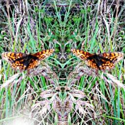 nature mirrored