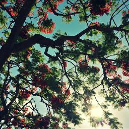 tree nature maui flower