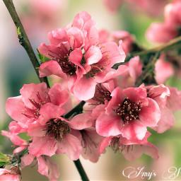 pinkandgreen flowers blossom blossoms bloom
