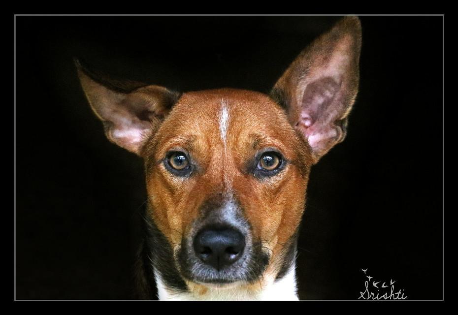 #dog #love #petsandanimals #freetoedit #eyes #ears #photography #emotions #dogfie :-D