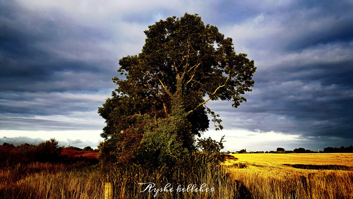 Don't lose hope. when the sun goes down the stars come out. 🌇🌠🌠 #words #nature #photography #quotesandsayings #tree #field #sky #ireland #landscape