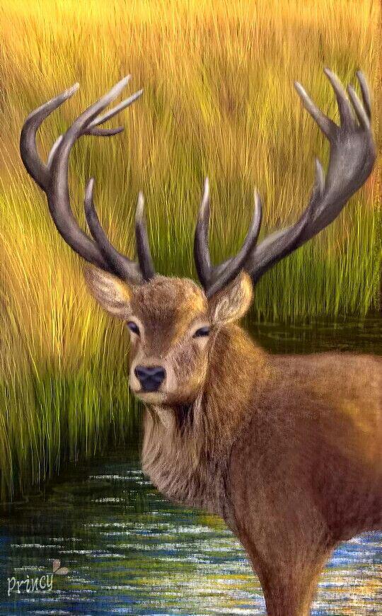 horns drawing digital art
