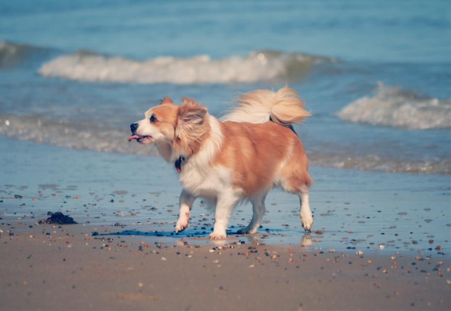 #interesting  #dog  #beach  #day  #england