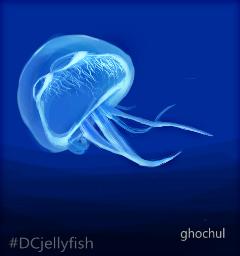 dcjellyfish