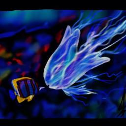 dcjellyfish kimferris