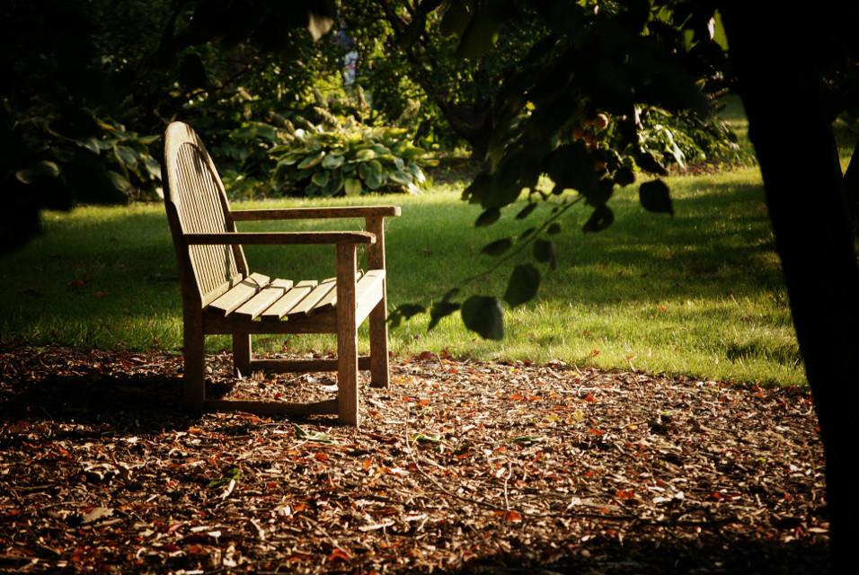 #bench #photography #ruleofthirds #oneofmyfavoriteshots