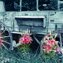 wheel old flowers nature wooden