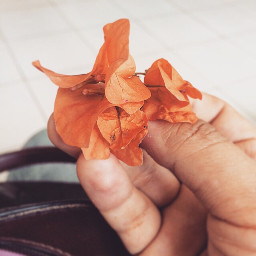 heartmelting flowers teachersupdate