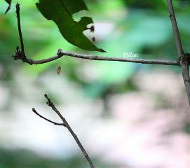 soft dangle swing hanging web