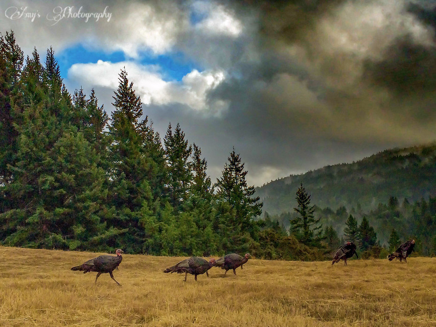 Another shot from this evening. I get to see this view everyday😊 ~ #Horizons #nature #turkeys #forest #freetoedit