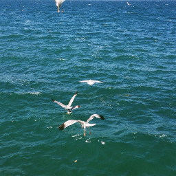 seagulls beach nature travel summer
