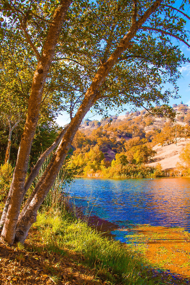 #tree #nature #landscape #colorful #lake #freetoedit