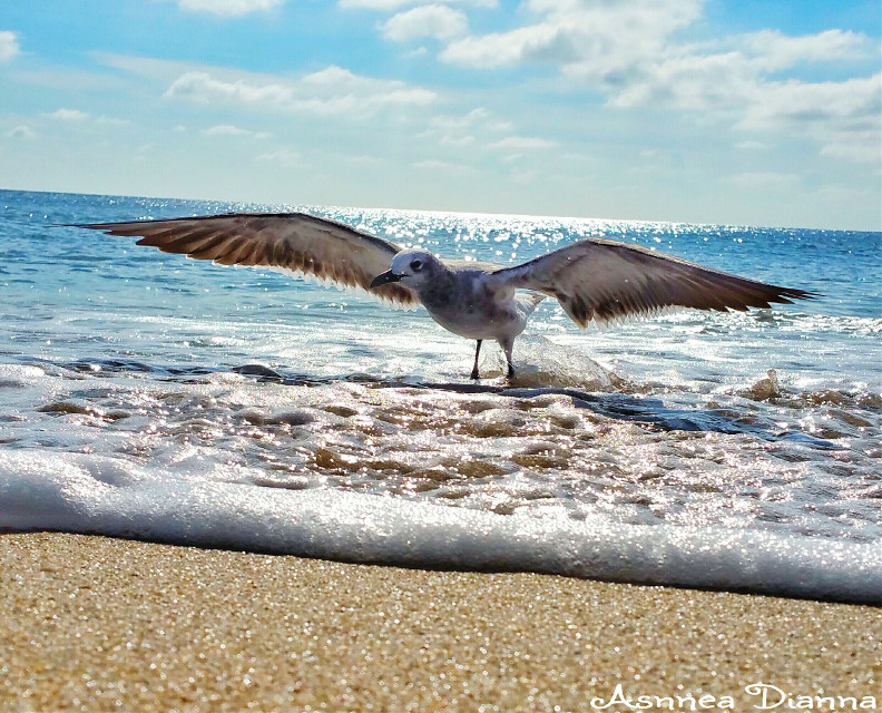 I want to fly away.... #photography #sea #seagull #beach #nature  #Lifesabeach