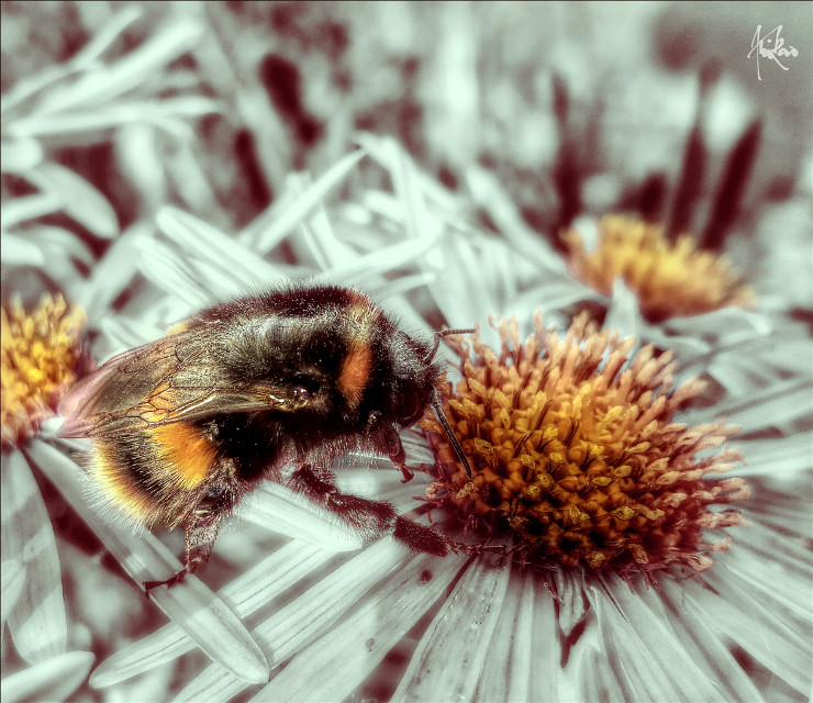 #bee #flower #bumble #nature