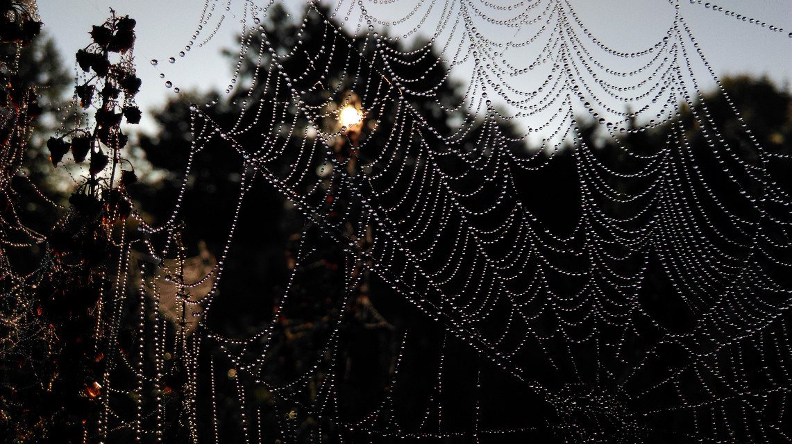 #spiderweb + #morningdew = perfect combination. Don't you agree? #nature #waterdrops #original #photography
