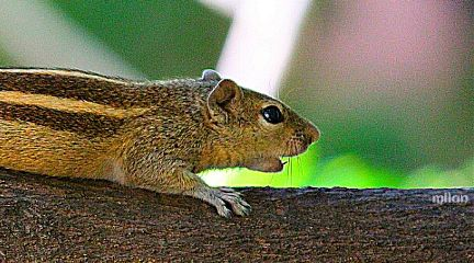 squirrel tree nature